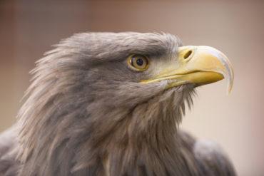 Terenowe warsztaty ornitologiczne
