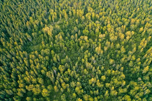 las z góry